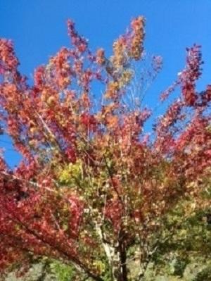秋の空 ②.jpg